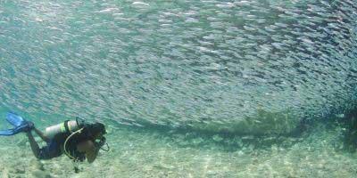 #10 Dive Site in the World – Bonaire