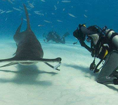 #9 Dive Site in the World – Galapagos