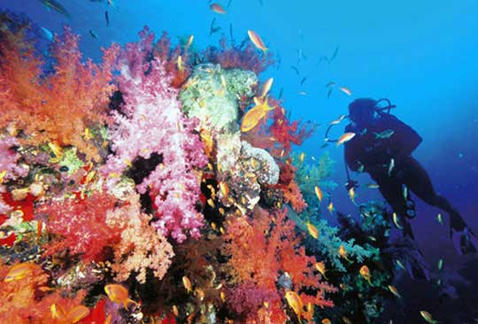 #6 Dive Site in the World – Ras Mohammed, Egypt