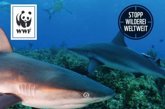 WWF publishes code of conduct for shark and ray tourism